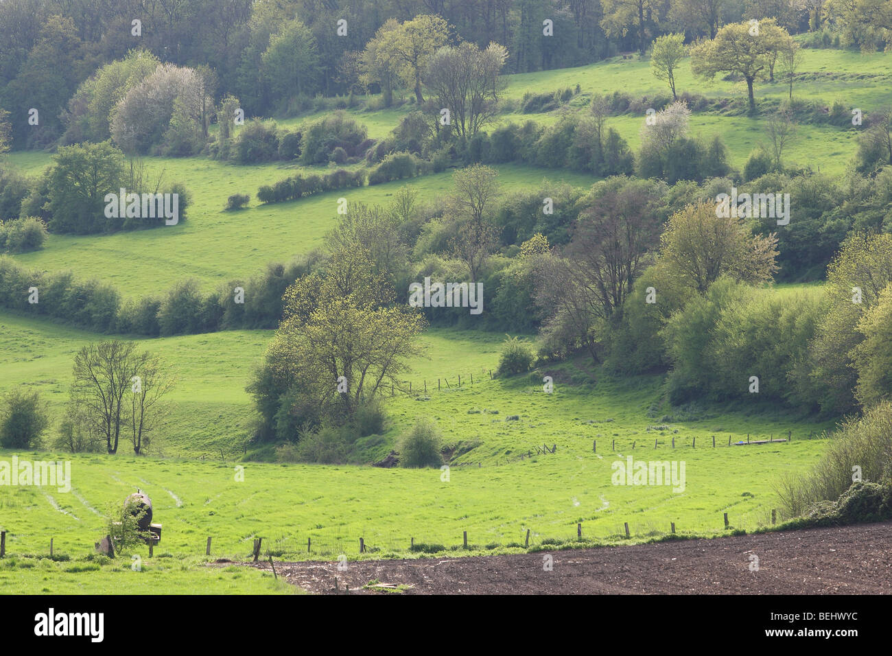 Bocage landscape with hedges and trees, Voeren, Belgium Stock Photo