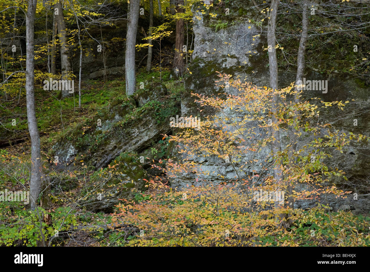 autumn trees on limestone bluff, Backbone State Park, Iowa - Stock Image
