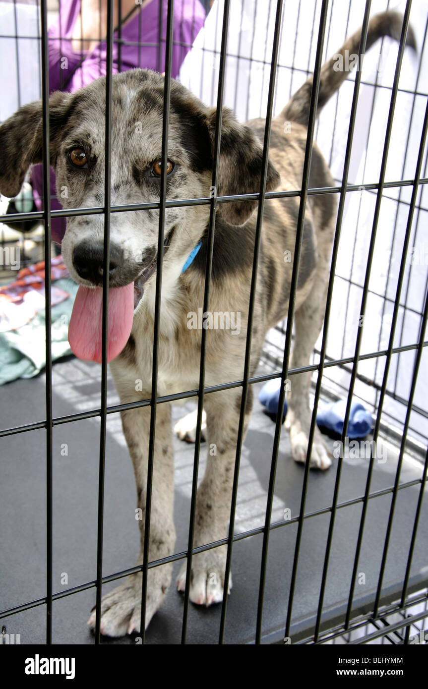 Dog in cage for adoption - Stock Image