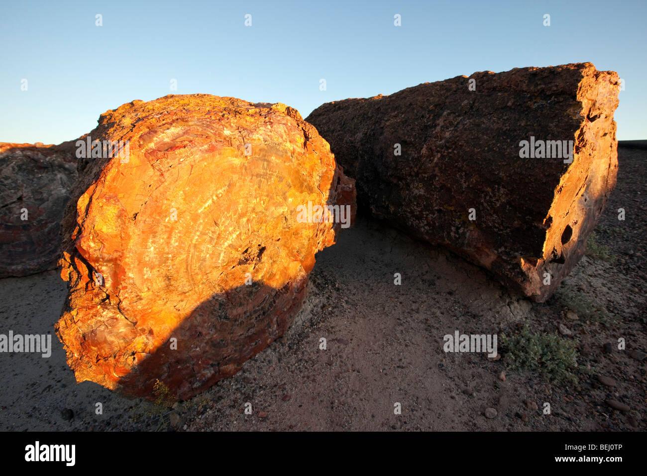 Petrified Logs, Petrified Forest National Park, Arizona - Stock Image