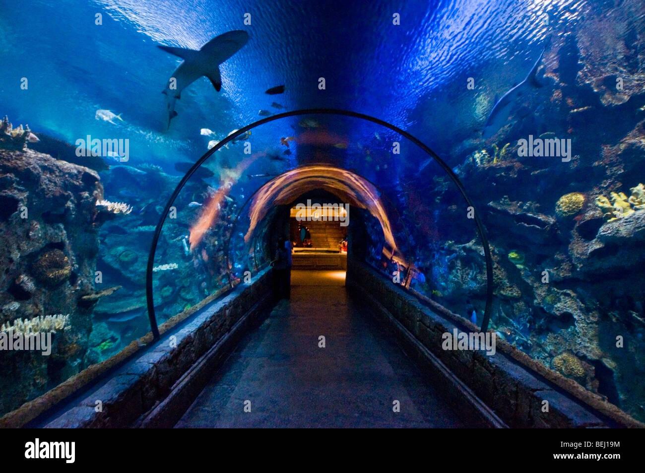 casino in vegas with aquarium