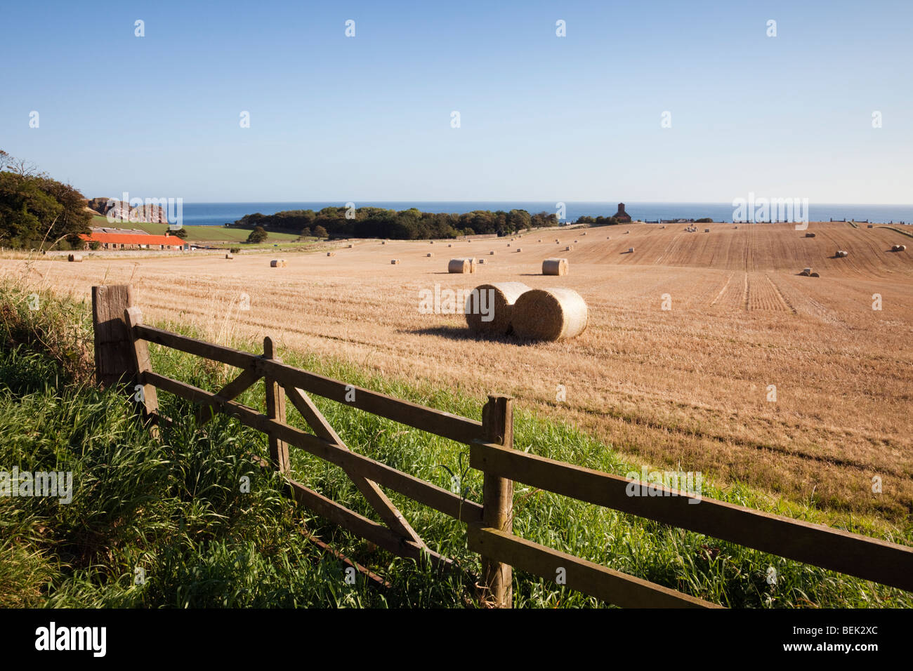 Fence with closed farm gate and field of round straw bales beyond on east coast in late summer. St Abbs Berwickshire - Stock Image