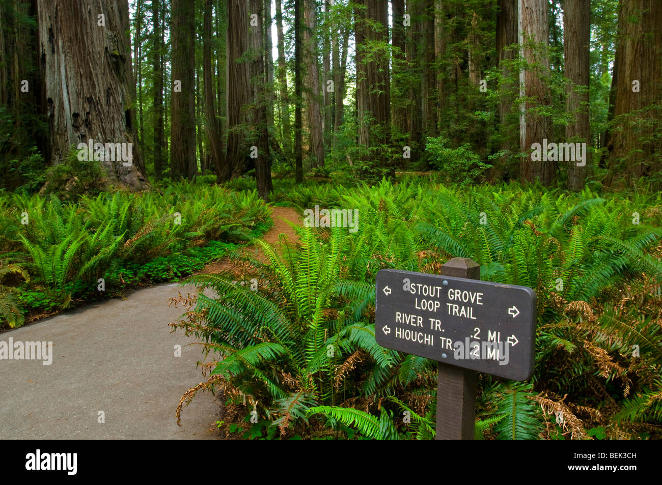 Trail through forest at Stout Grove, Jedediah Smith Redwoods State Park, California - Stock Image