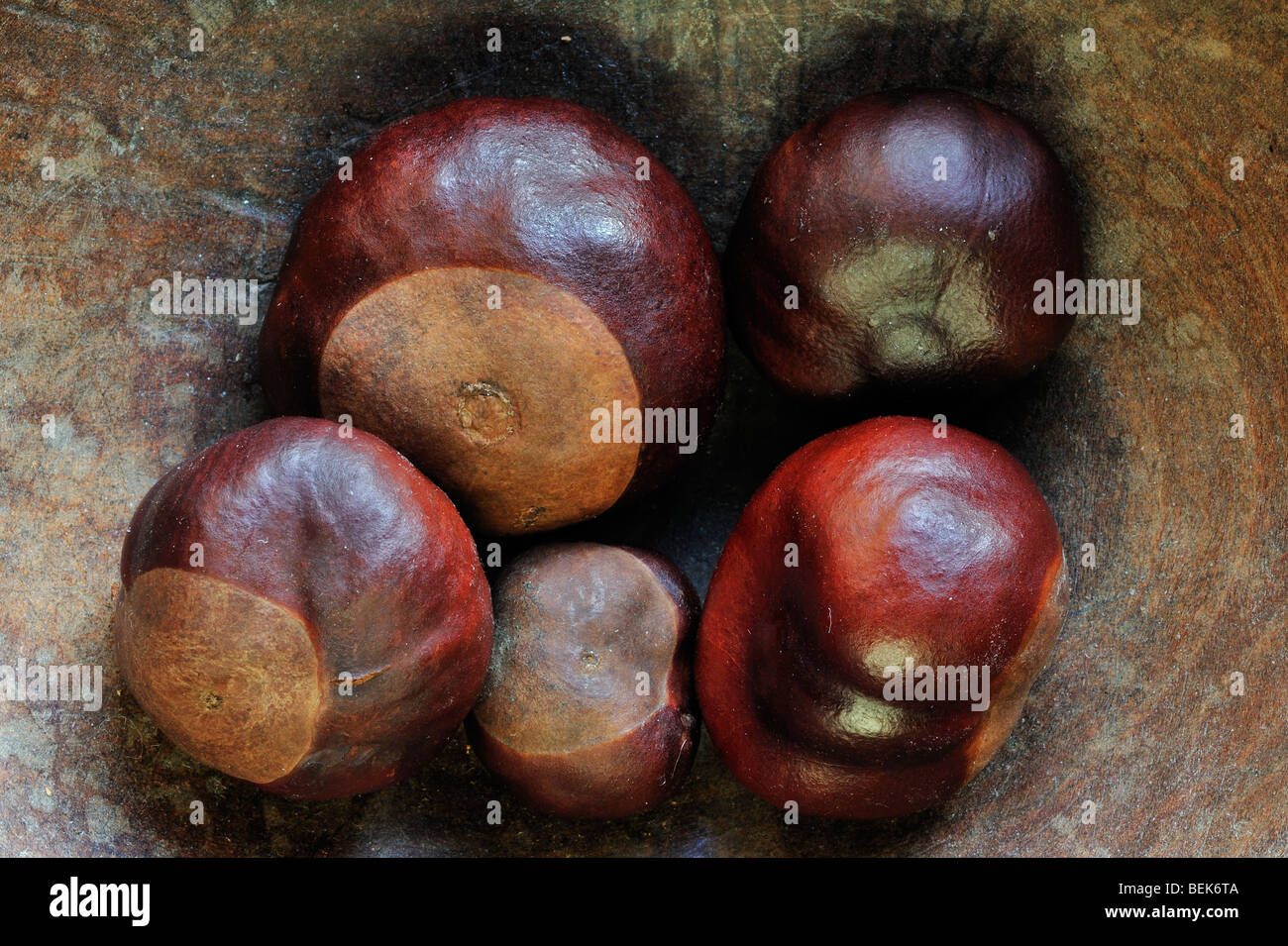Common Horse-chestnut nuts / conkers (Aesculus hippocastanum) harvested in autumn and displayed in wooden bowl - Stock Image