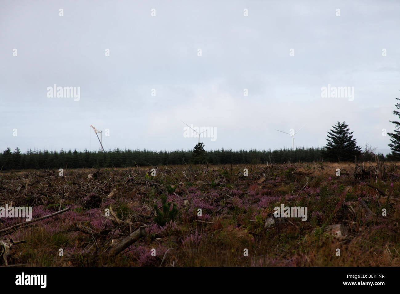 Wind turbines above forestry skyline brechfa forest - Stock Image