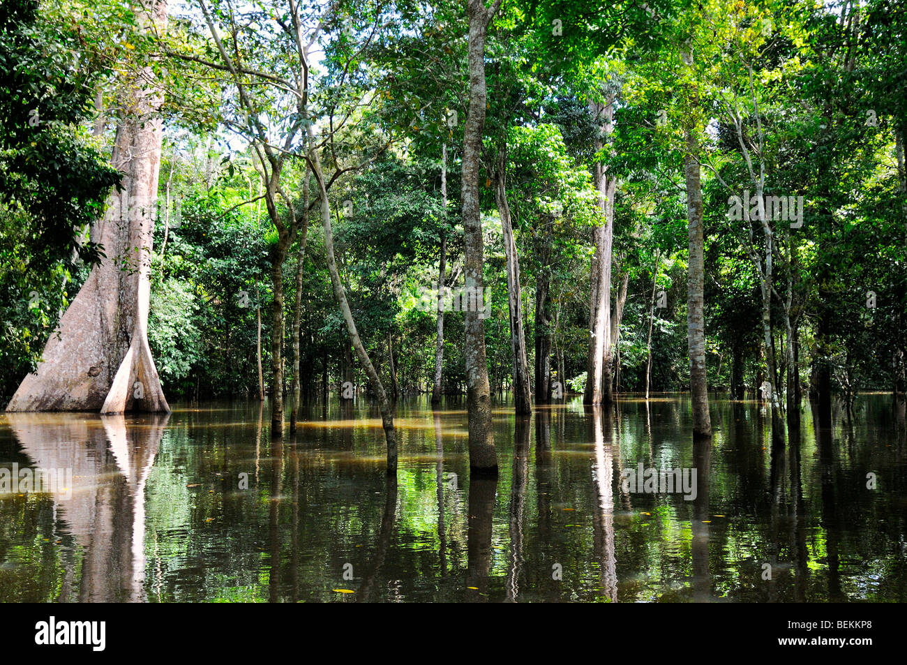 Amazon river forest rainforest during the high water season. - Stock Image