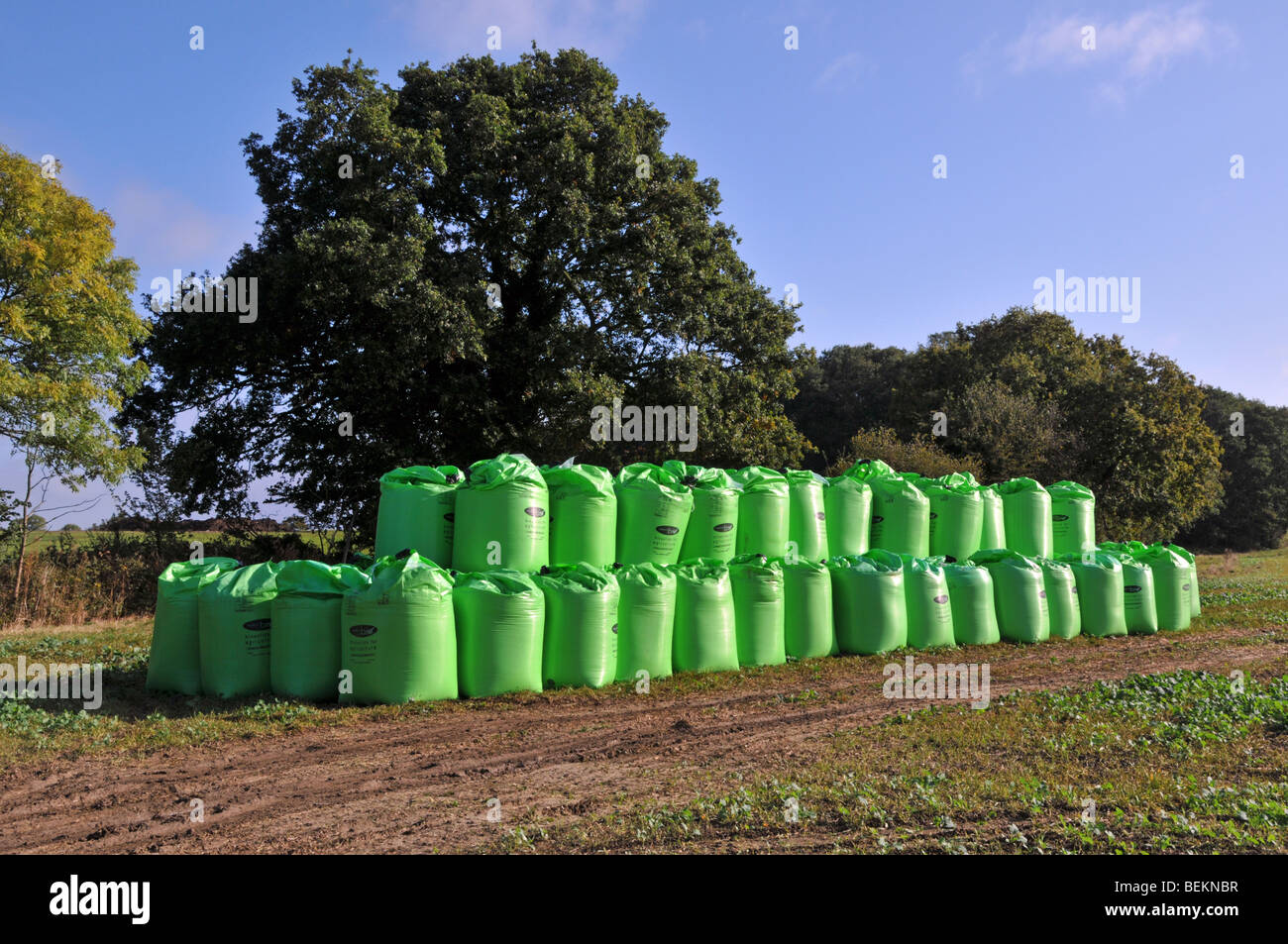 Bagged Biosolids contents derived from sewage by Nutri Bio part of Anglian Water stacked in a farm field Stock Photo