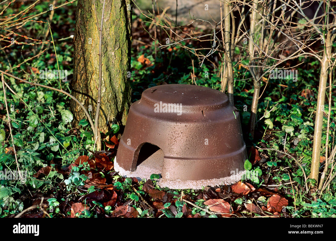 Nest in hogbox in garden for hibernating European hedgehog (Erinaceus europaeus) in winter - Stock Image