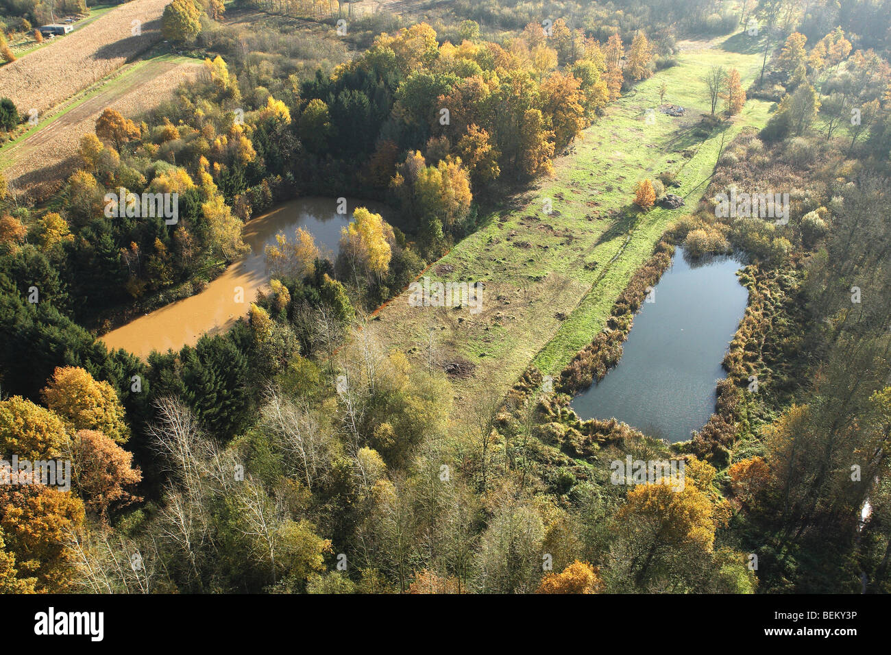 Mixed forest with Oak (Quercus robur), Birches (Betula sp.) and pool in autumn from the air, Belgium - Stock Image