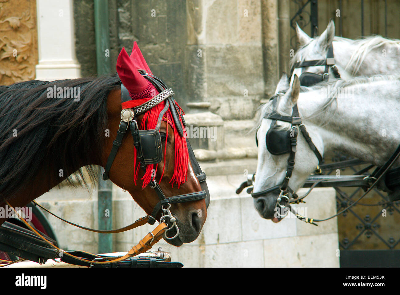 Heads of brown and gray horses with harness - Stock Image