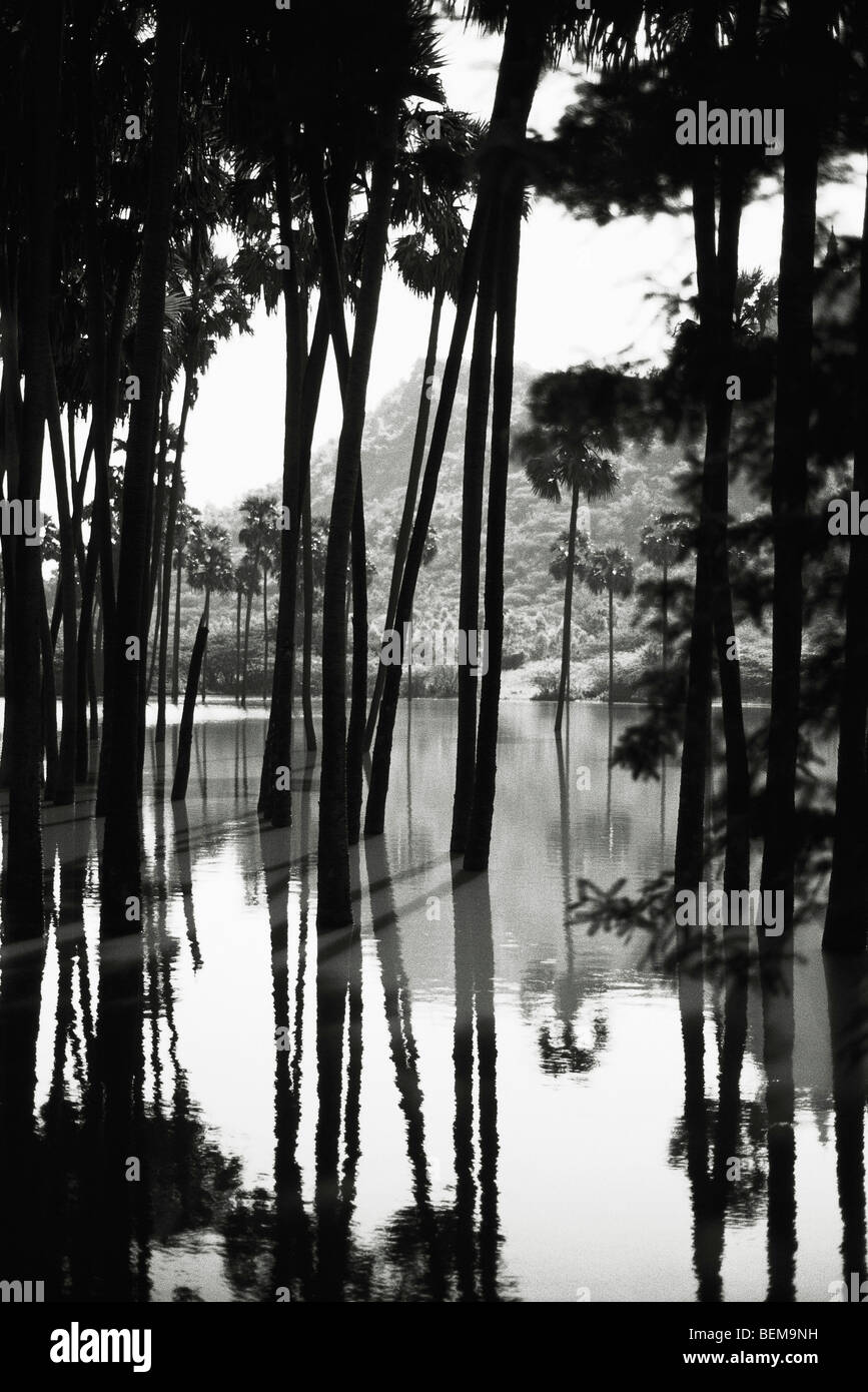 Myanmar (Burma), palm trees in waterscape - Stock Image