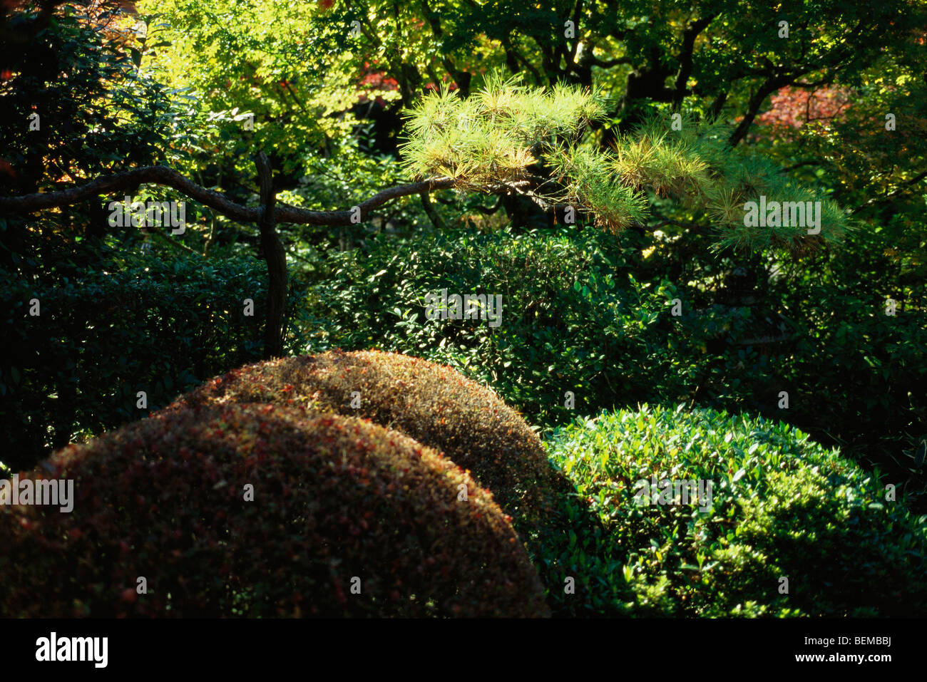 Trees and shrubs in Japanese garden Stock Photo