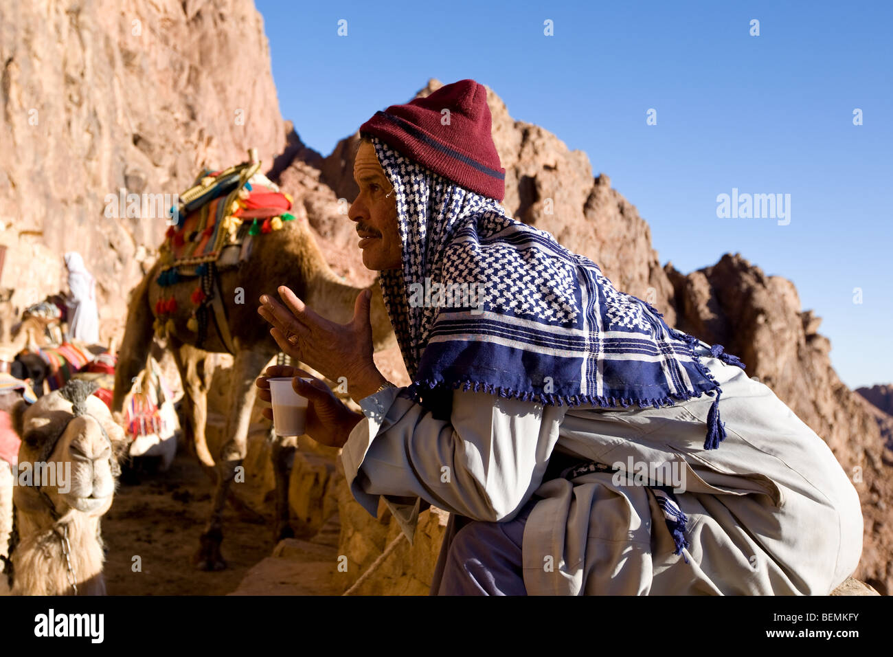 Egyptian bedouin guide and camel early morning on trek from Mount Sinai, Egypt, Middle East - Stock Image