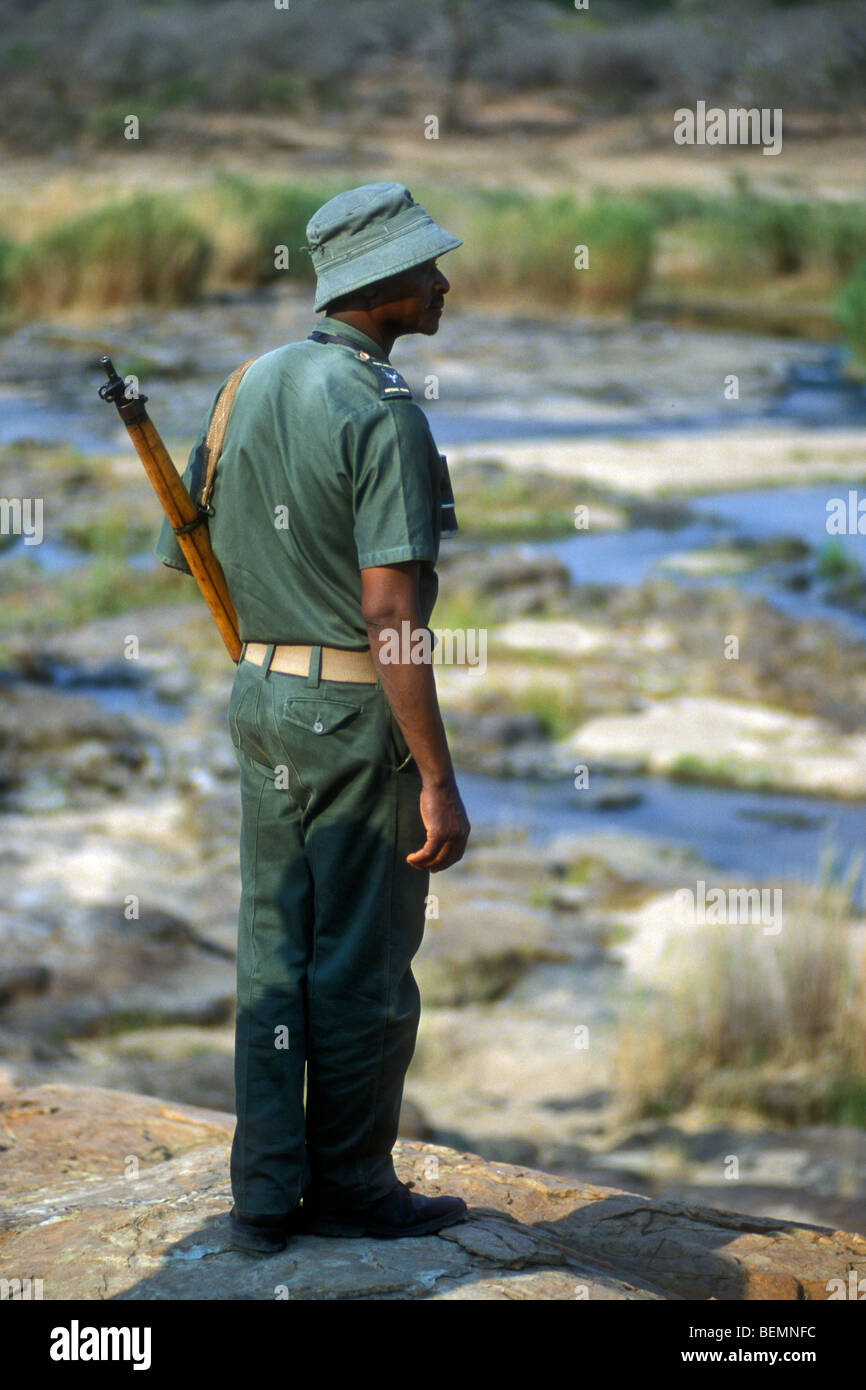 Black ranger armed with rifle patrolling in the Kruger National Park, South Africa - Stock Image