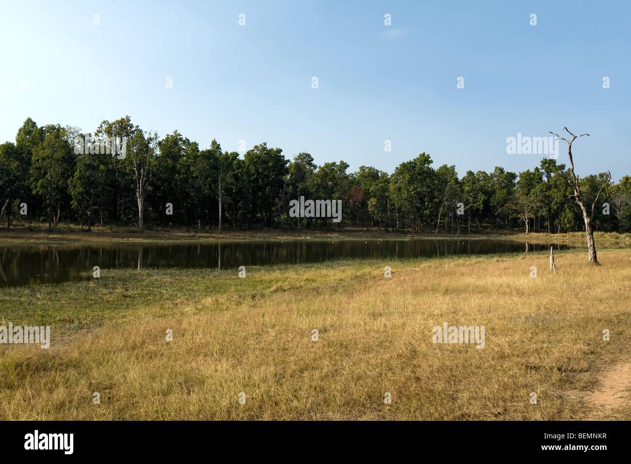 Bandhavgarh National Park India a - Stock Image