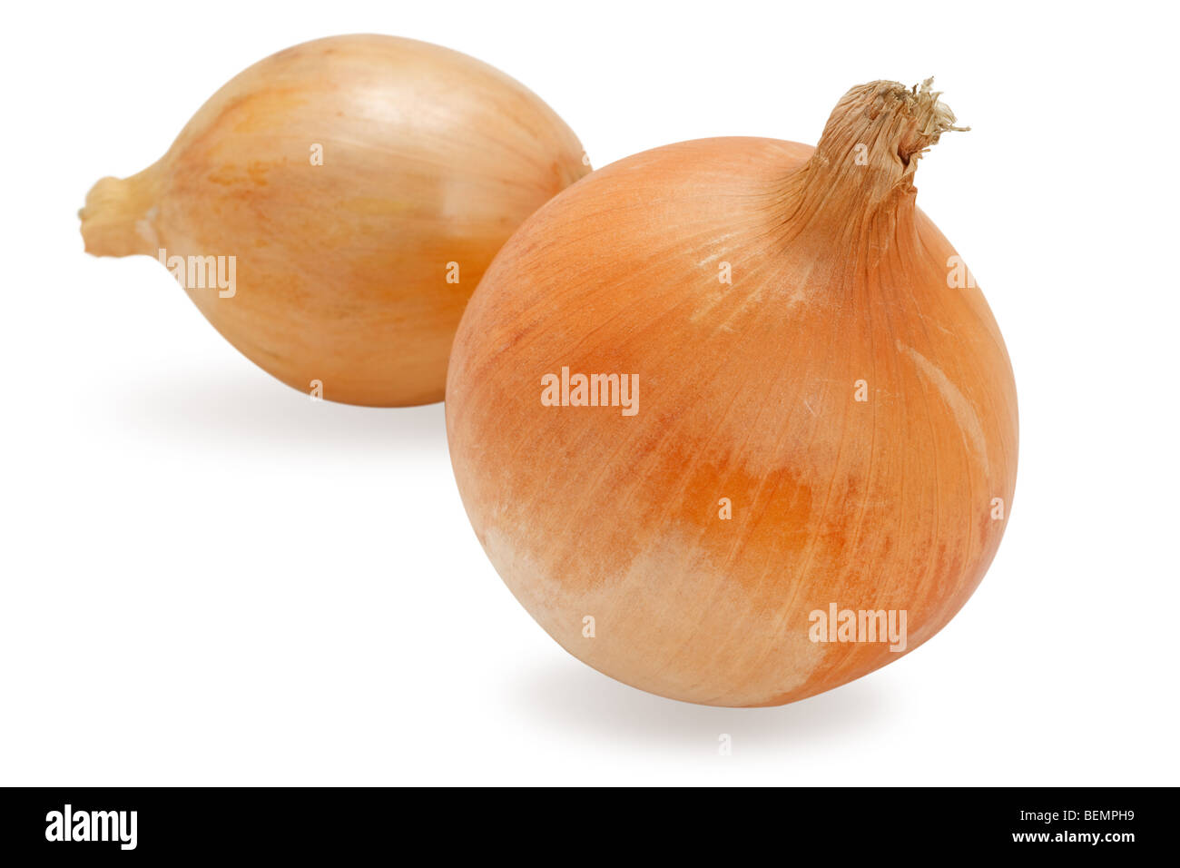 Two fresh onion isolated on white background - Stock Image