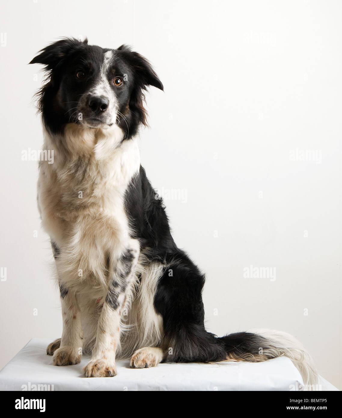 loyal companion - Stock Image