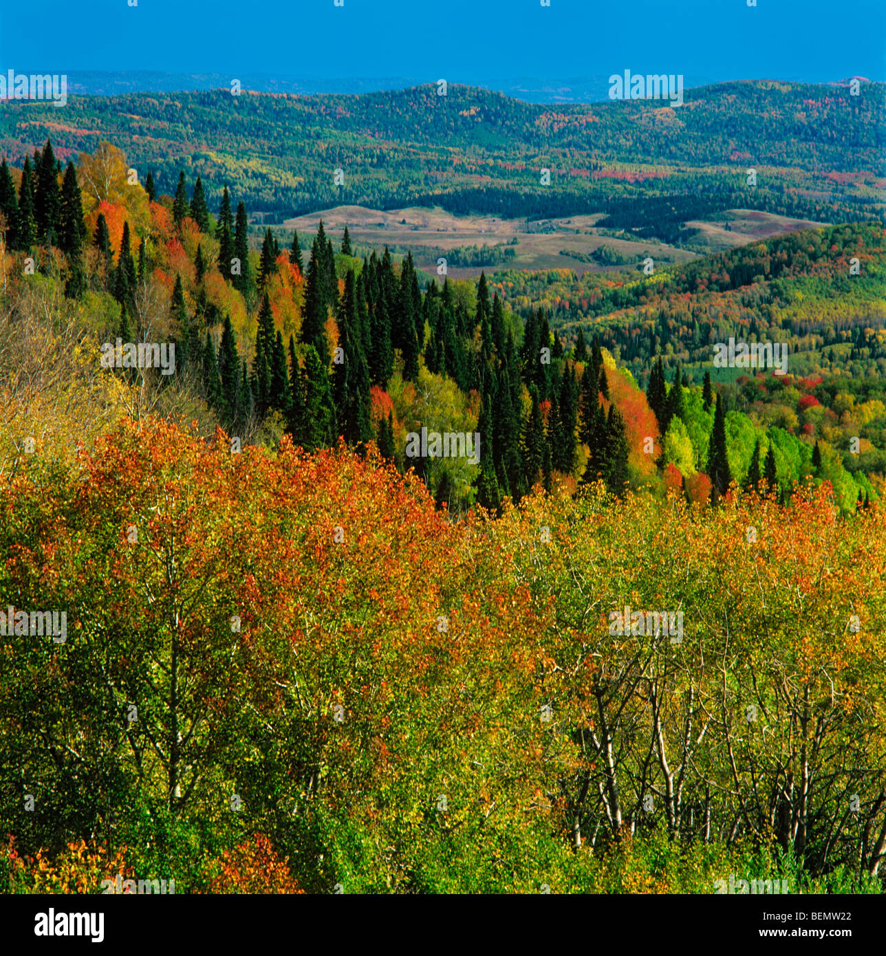 Autumn taiga in the Altaian foothills. Siberia, Russia - Stock Image