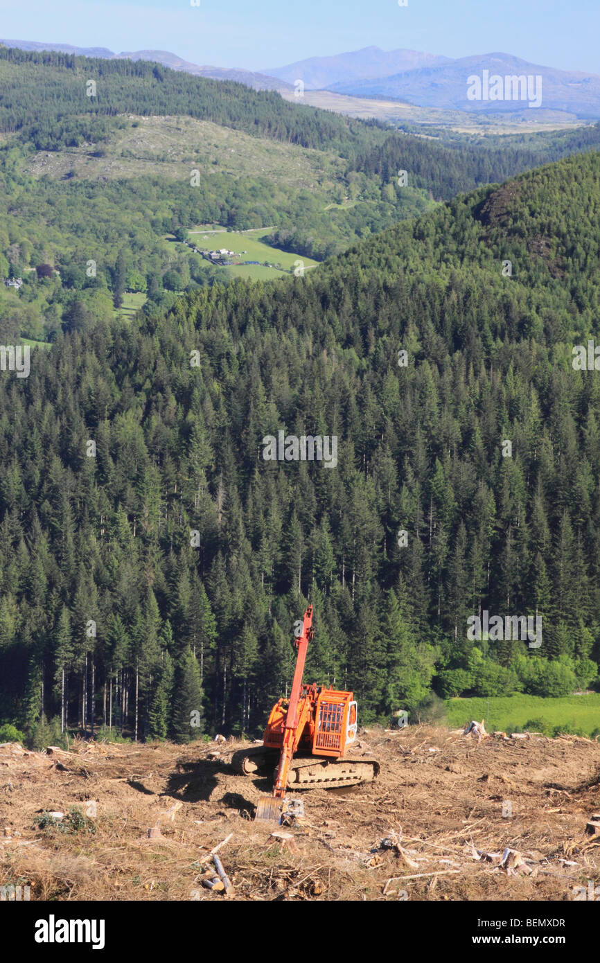 Conifer forest clearance with excavator, Coed y Brenin Snowdonia National Park, North Wales Great Britain UK Stock Photo