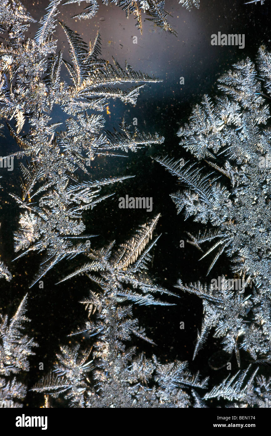 Ice crystals / frost flowers forming on frozen window pane during hoarfrost in cold winter - Stock Image