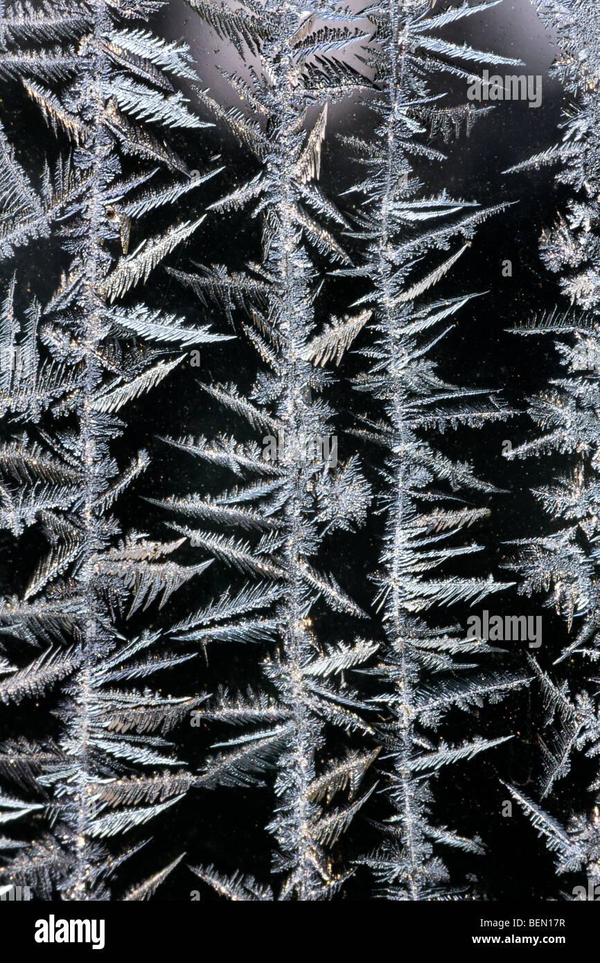 Ice-crystals / frost flowers on frozen window in winter, Belgium - Stock Image
