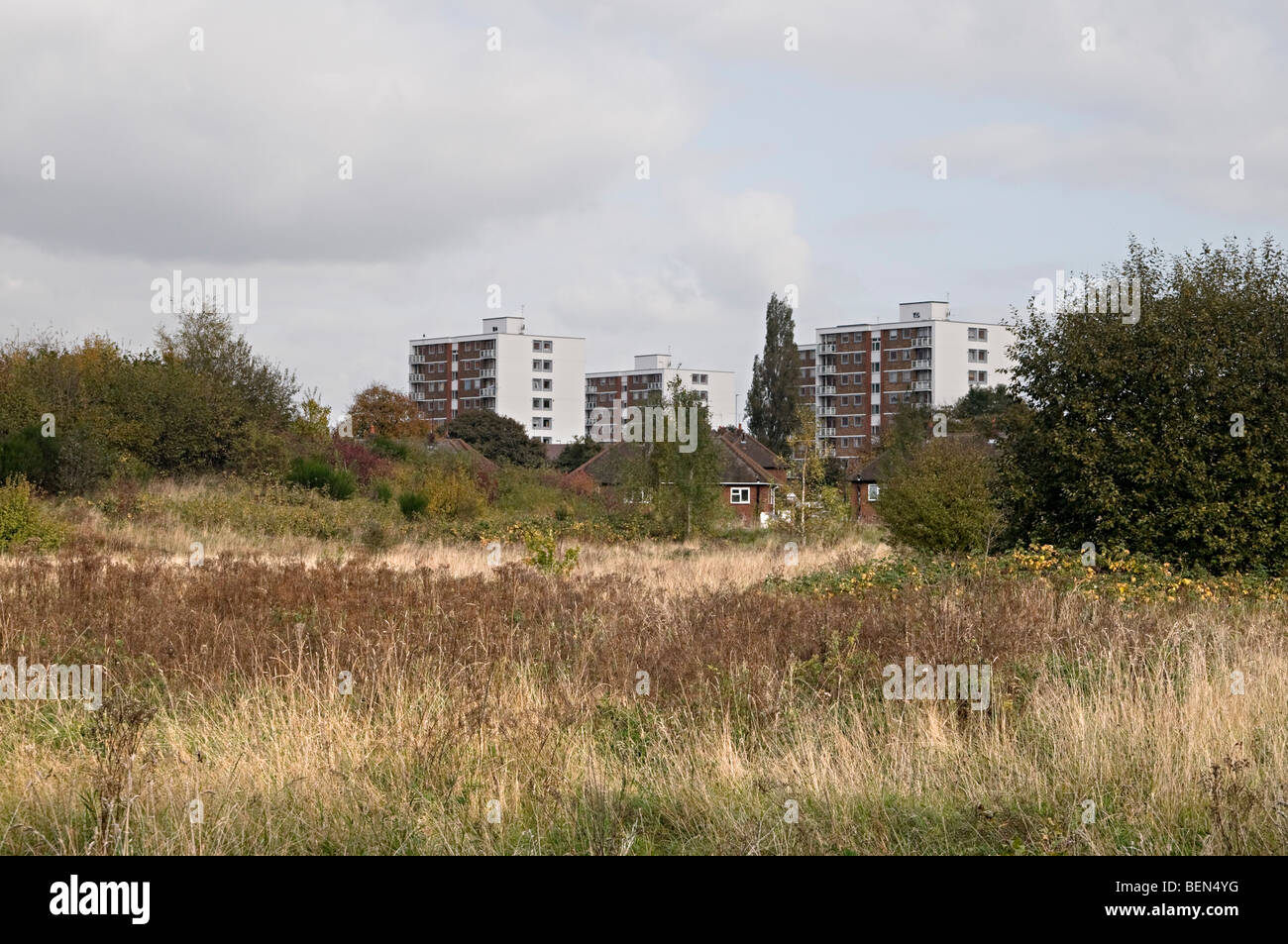 Black country urban forest