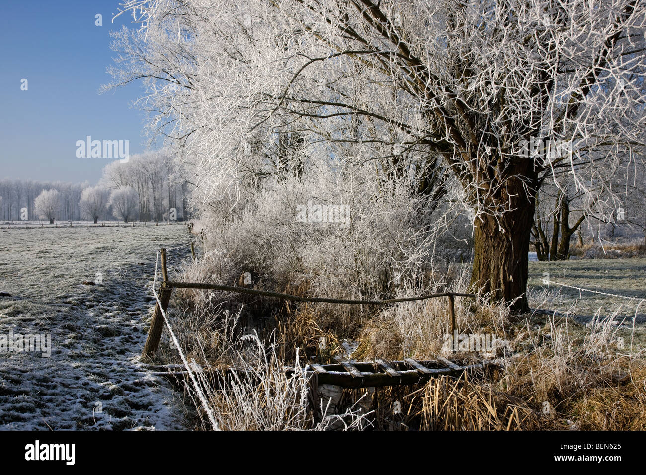 Wooden bridge over brook and pollard willows (Salix sp.) and poplars covered in hoarfrost in winter, Belgium Stock Photo