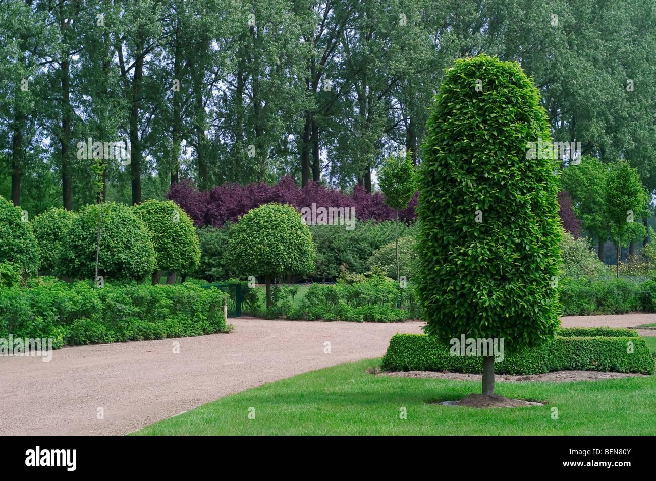 Trimmed trees in park, Belgium - Stock Image