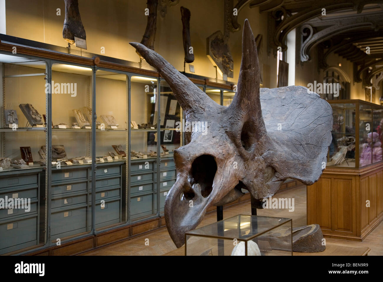 Triceratops skull in the Gallery of Palaeontology and Comparative ...