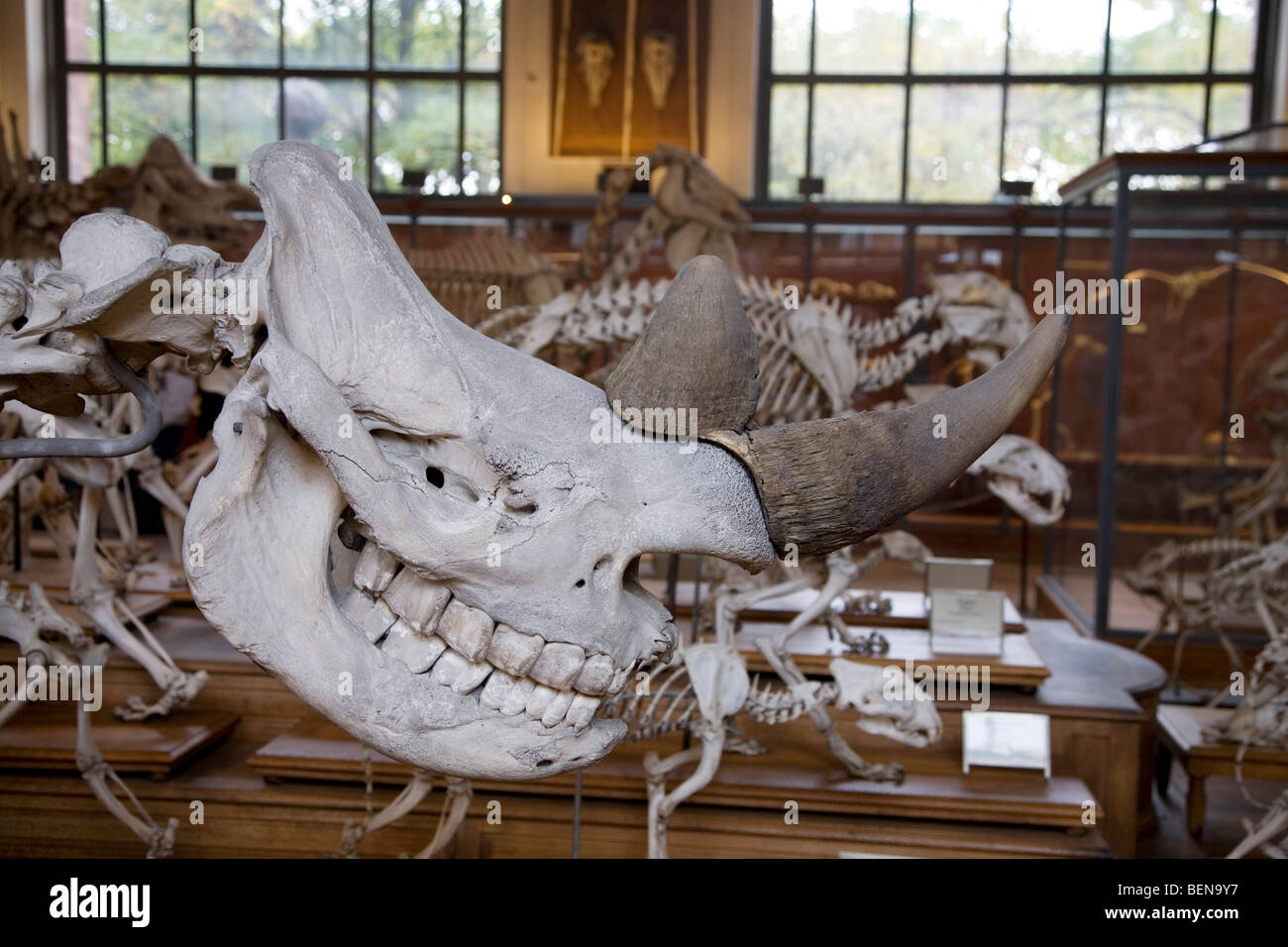 Gallery of Paleontology and Comparative Anatomy at the Natural Stock ...