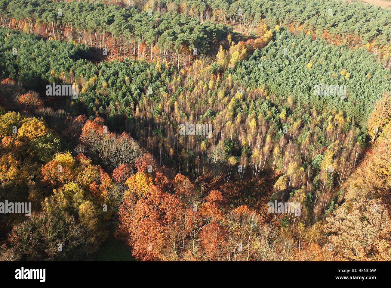Mixed forest with Beech (Fagus sylvatica) and Oak (Quercus robur) in autumn from the air, Belgium - Stock Image