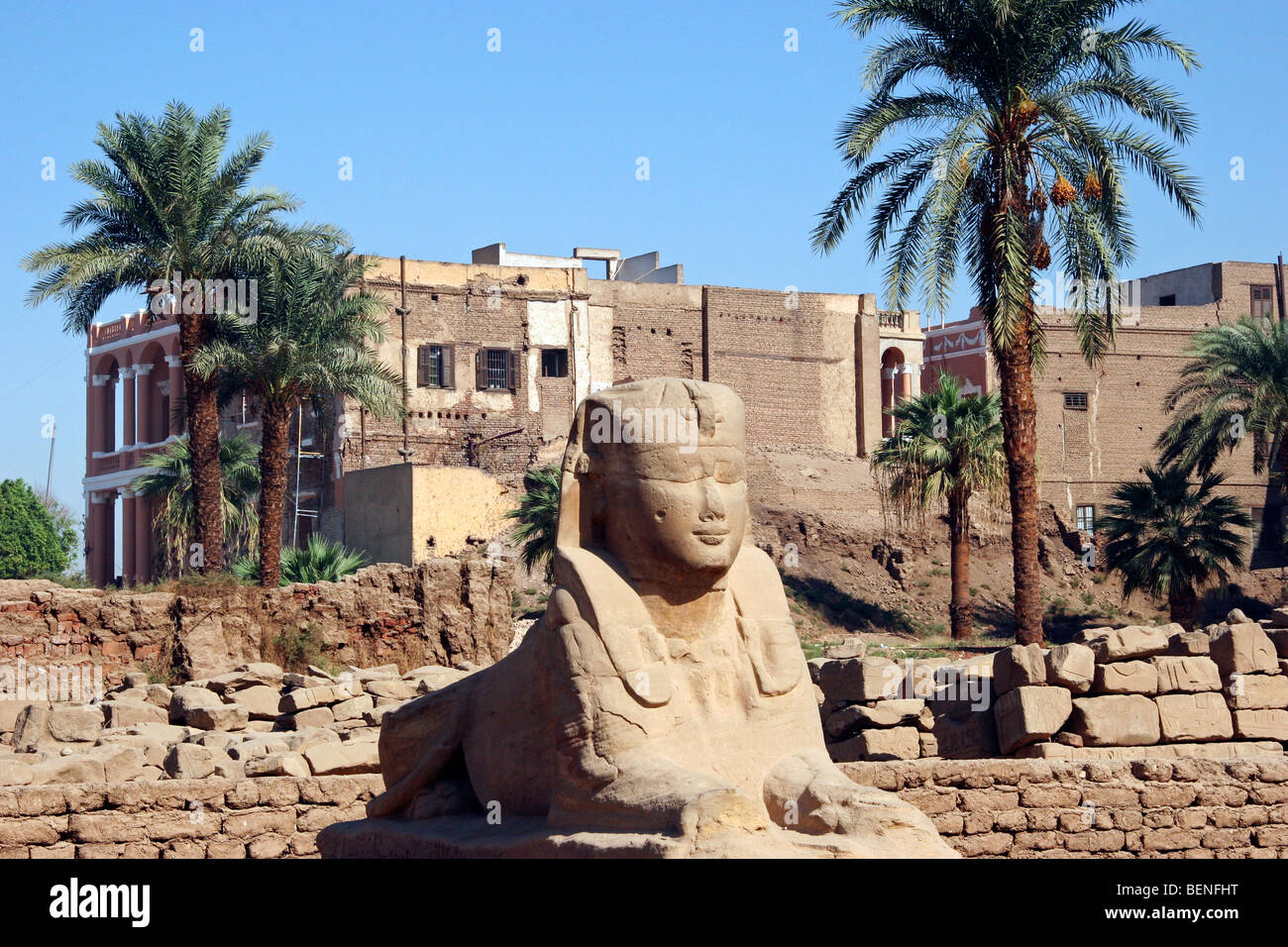 Sphinx of the Luxor Temple and new buildings, Egypt, North Africa - Stock Image