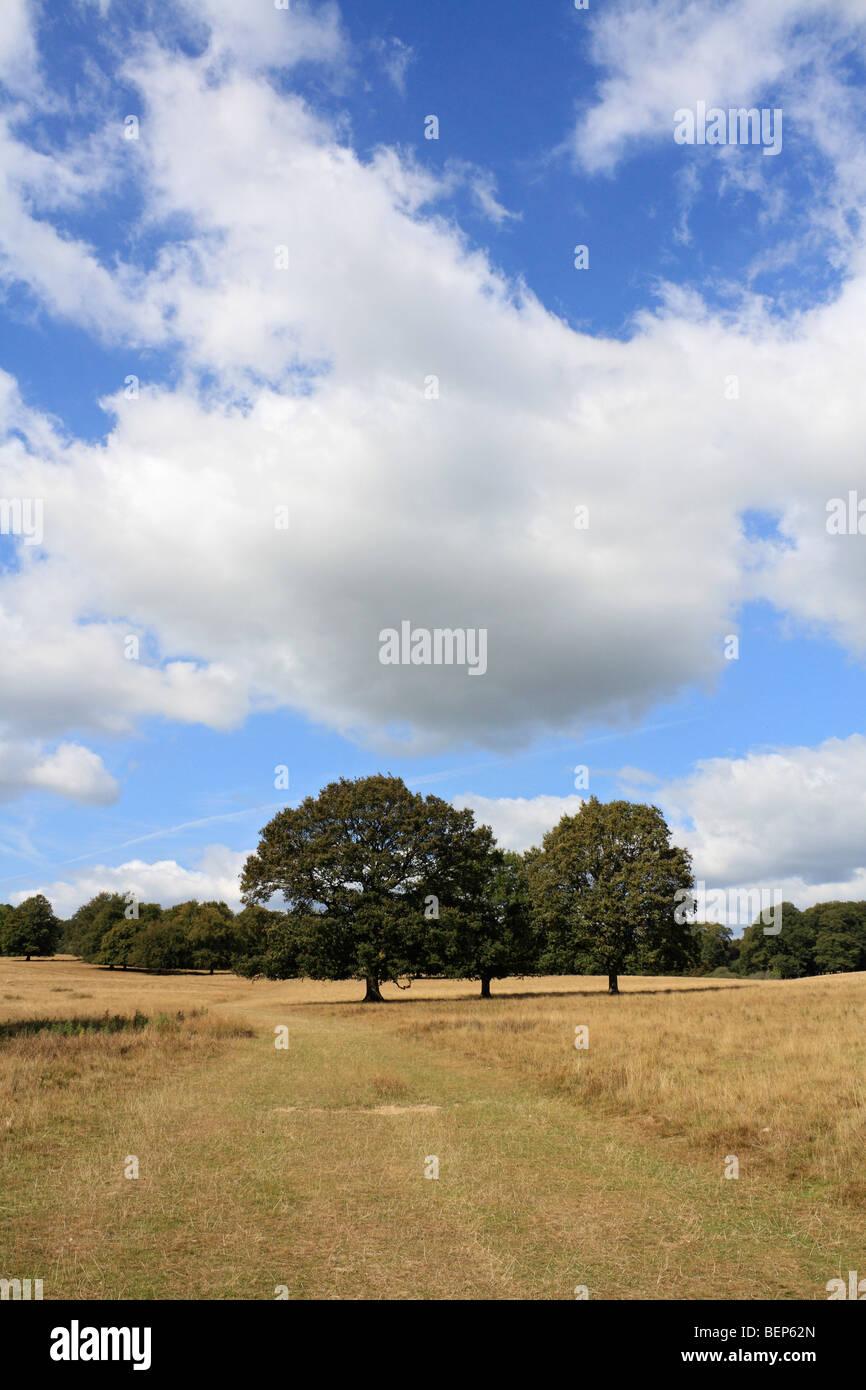Petworth deer park, West Sussex, England, UK - Stock Image