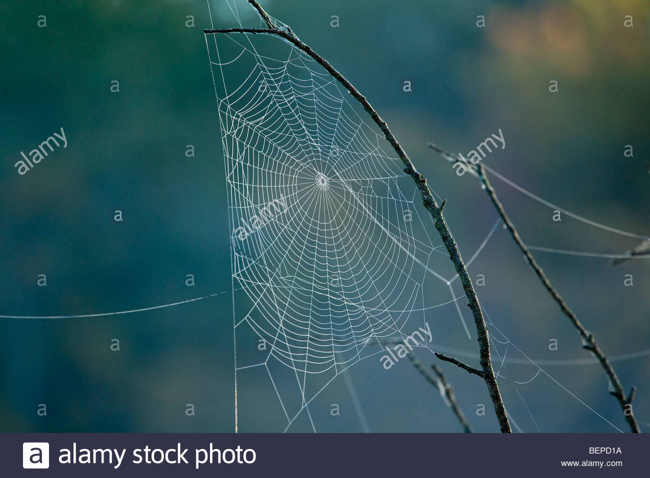 Spider's orb web in Rouge Park an urban wilderness in Toronto Ontario Canada - Stock Image