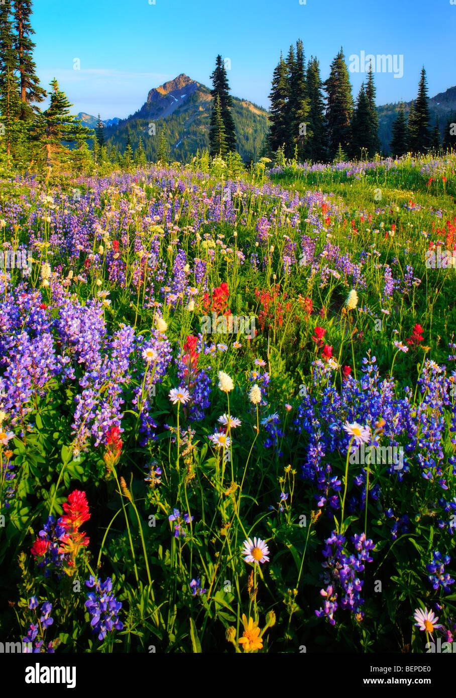 Blanket of wildflowers - Stock Image