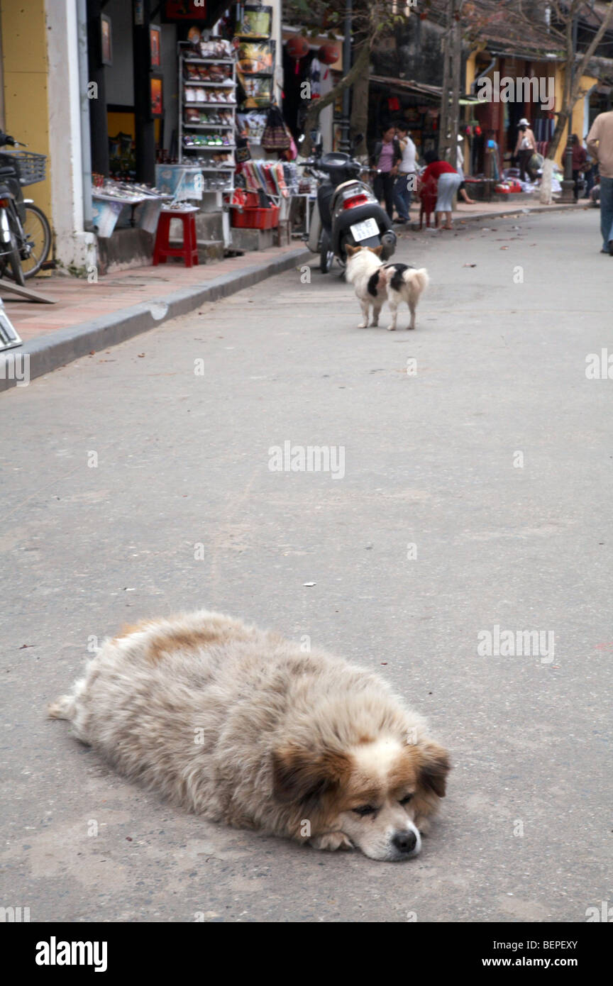 VIETNAM Dog of Hoi An. photo by SEAN SPRAGUE - Stock Image