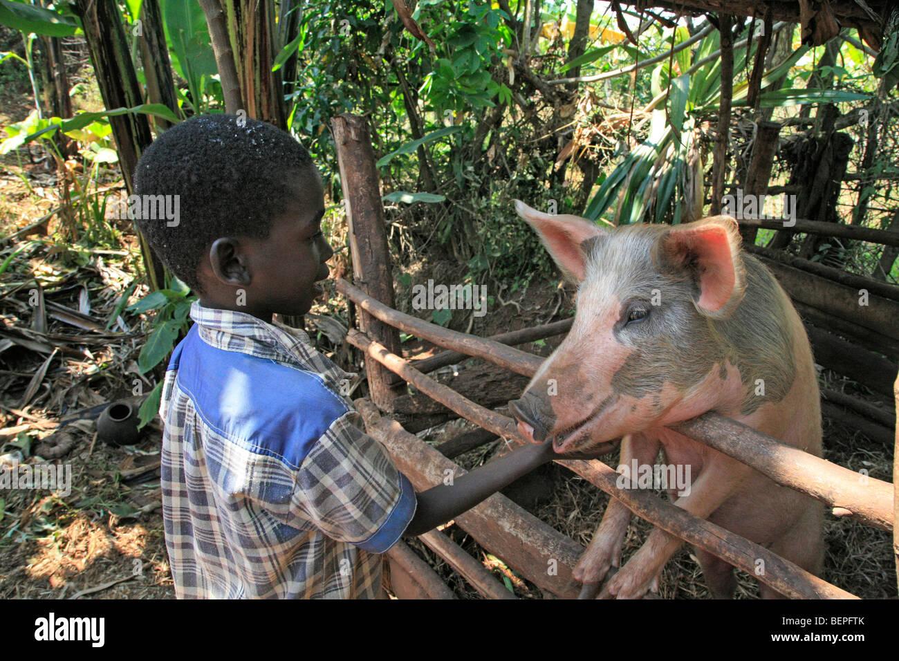 BURUNDI Boy with pig, Gitera. PHOTOGRAPH by Sean Sprague 2009 - Stock Image