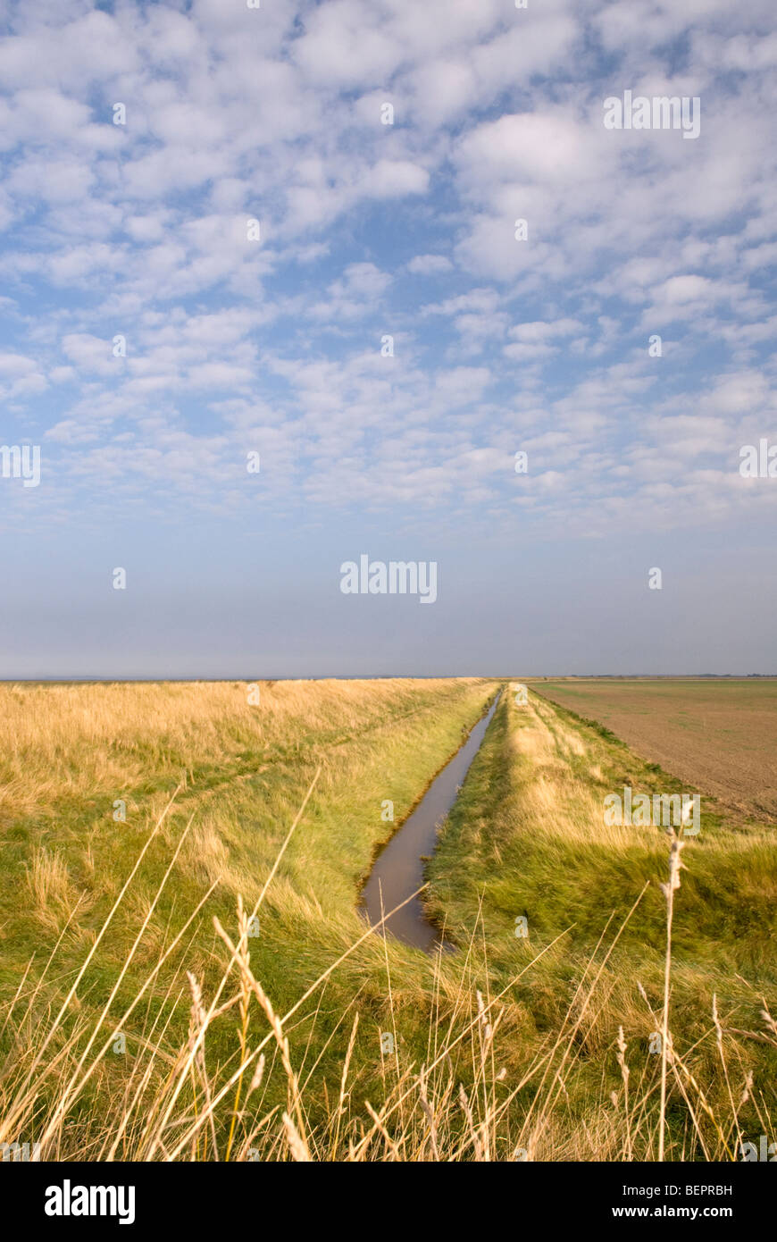 An agricultural flood control drainage ditch, Lincolnshire, England. Stock Photo