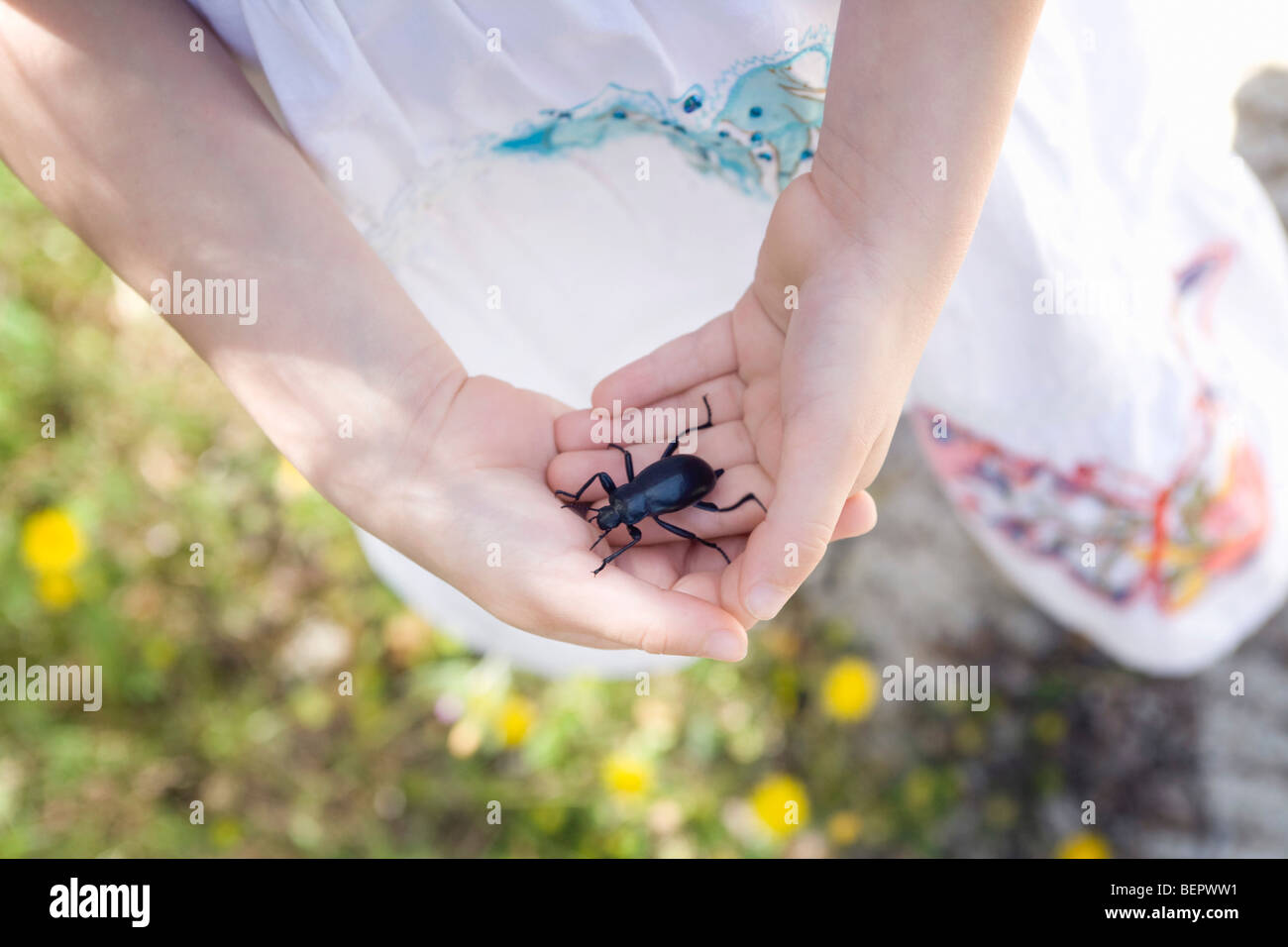 A young girl holding a beetle - Stock Image