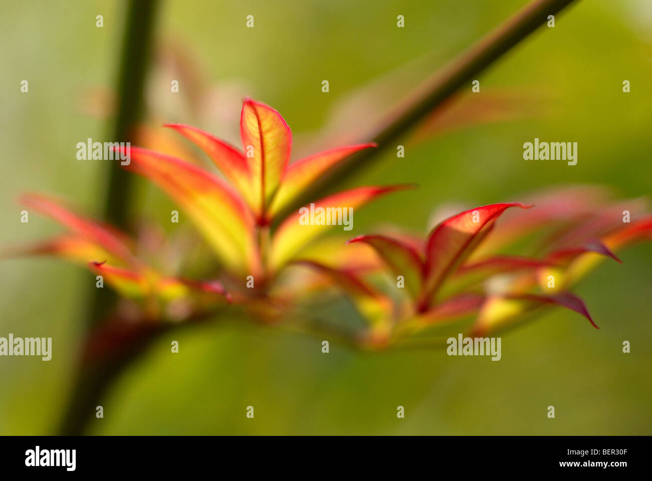 Autumn leaves, green background, leave, red, yellow, branch, macro, close-up, vein, leaf vein - Stock Image