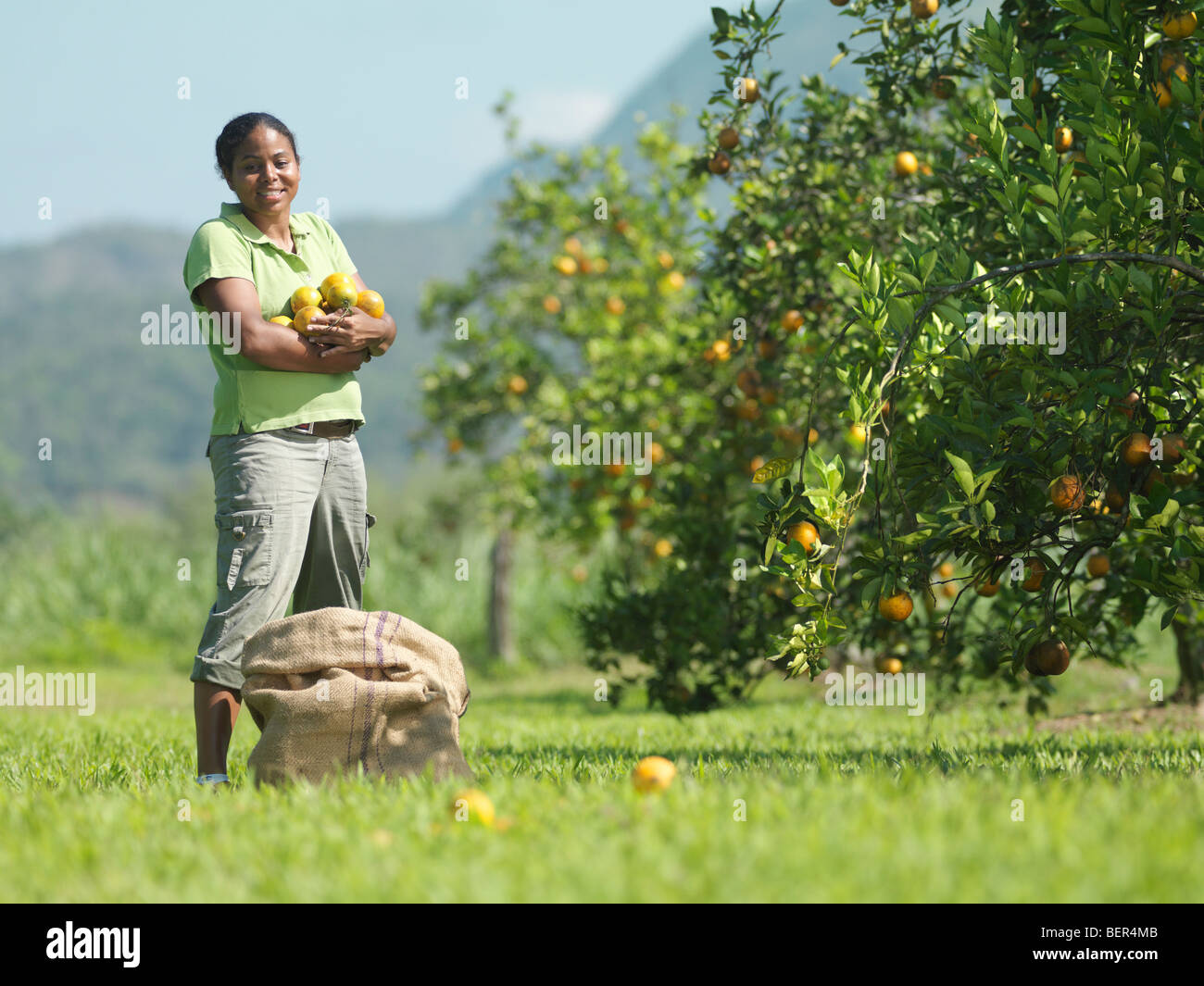 Female Worker Picking Oranges - Stock Image