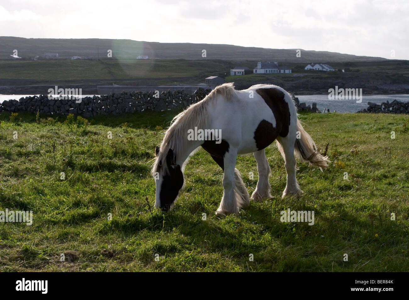 Horse in field surrounded by traditional stonewalls, Inis Mor (Inismore) Island, Aran Islands, Co. Galway, Ireland - Stock Image