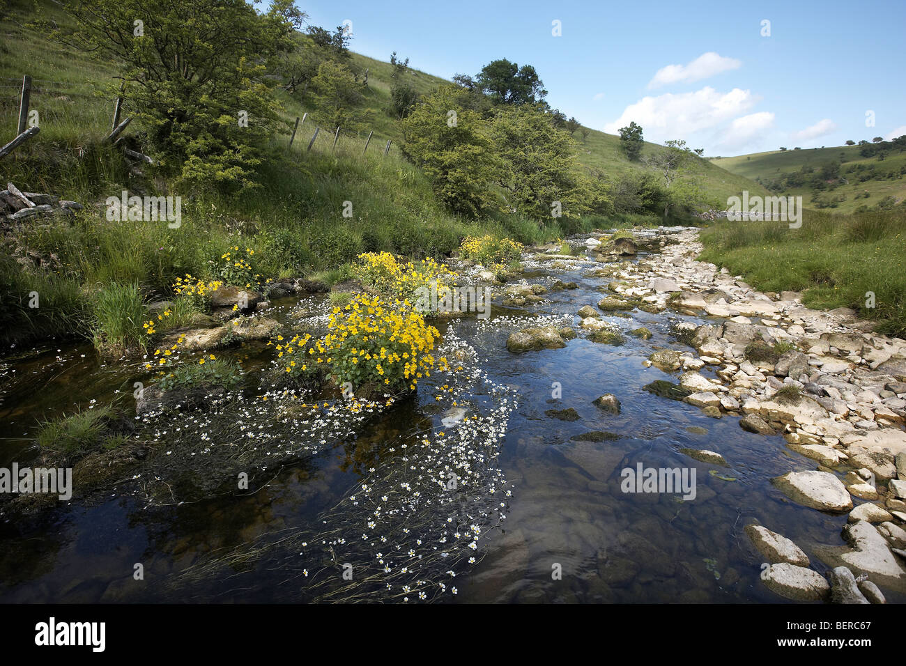 Scandal Beck flowing through Smardale Gill National Nature Reserve Cumbria, UK - Stock Image