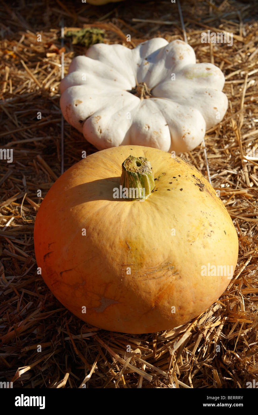 Harvest festival pumpkins display - - Stock Image