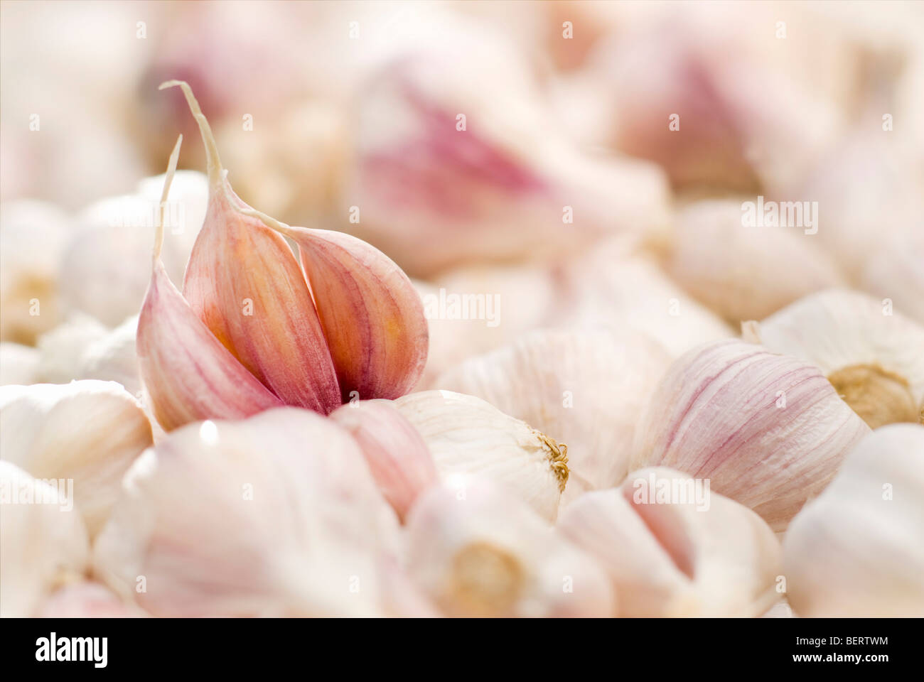 Certified organic fresh garlic - Stock Image