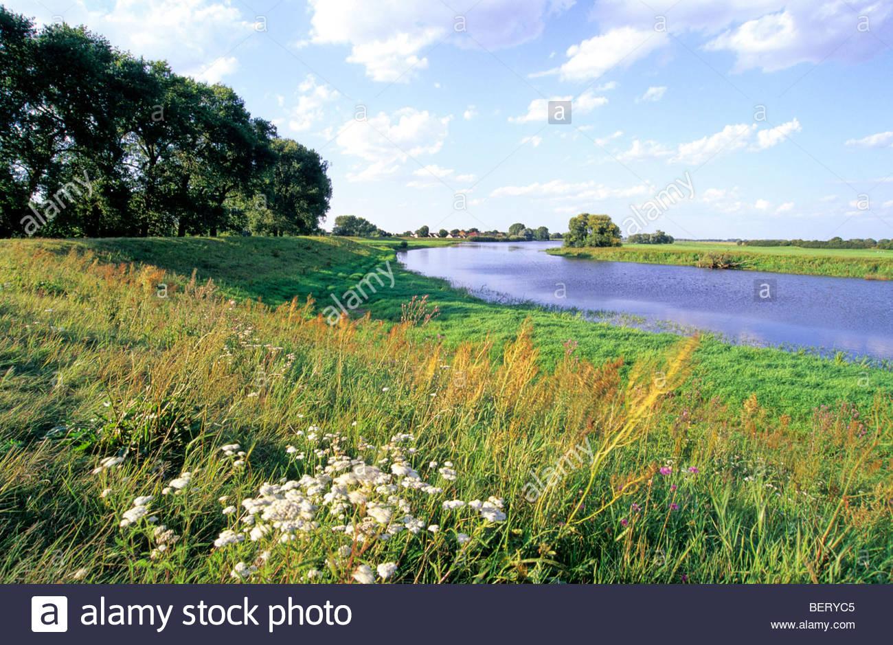 cut-off meander, floodplains river Elbe, B sewig, Germany - Stock Image