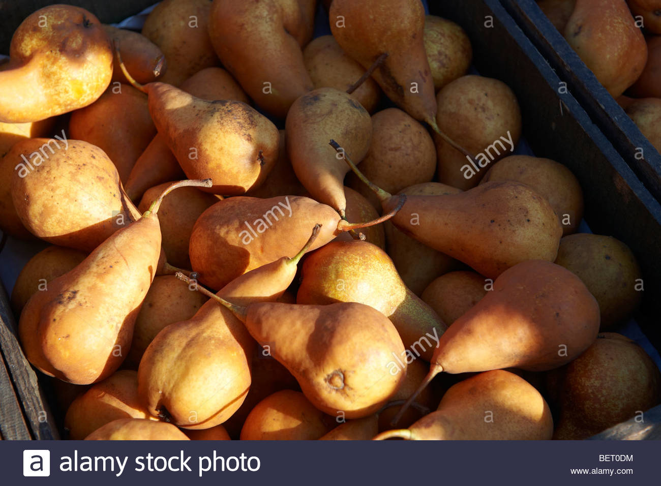 organic Russet pears pear fresh fruit - Stock Image