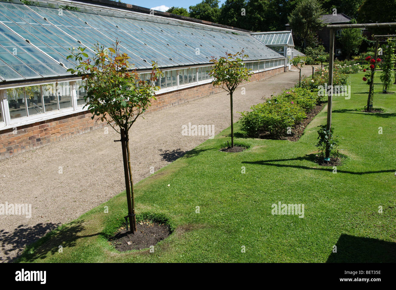 Rose Garden In Front Of Greenhouse At Croxteth Hall Gardens Stock