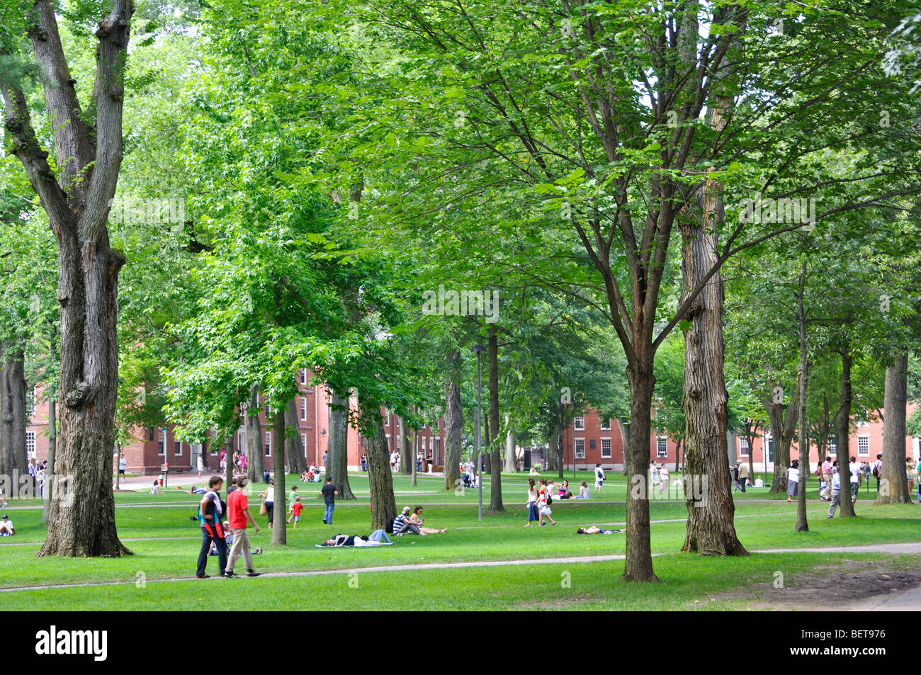Harvard University campus in Cambridge, Massachusetts - Stock Image