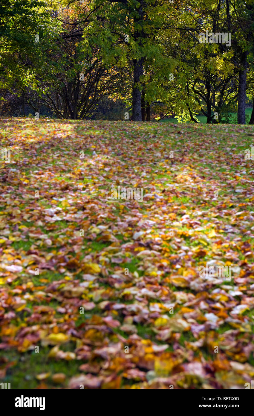 creative shallow focus image of trees in autumn Stock Photo